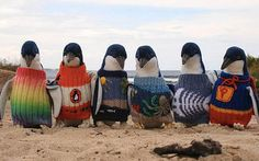 Tučňáci fasují fešné svetříky.
