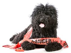 Top 10 Puppy Proofing Tips to Save Dog Lives for National Puppy Day!