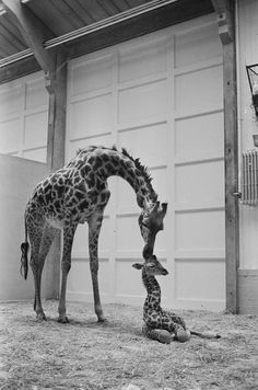 """""""If you don't know the yoga poses then ASK THE INSTRUCTOR.""""   16 Baby Giraffes Who Don't Give A Damn"""