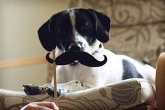 Jack Russell + Beagle = Jack-A-Bee | 11 Mixed Breed Dogs That Will Melt Your Heart