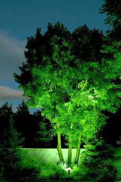 Professional Landscape u0026 Tree Lighting | Park City u0026 Salt Lake City UT | Brite Nites & Professional Landscape u0026 Tree Lighting | Park City u0026 Salt Lake ... azcodes.com