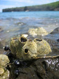 Barnacles at Playa Santa Cruz Rocky Shore, Out To Sea, Patterns In Nature, Print Patterns, A Level Art, Rock Pools, Natural Forms, Ocean Life, Marine Life