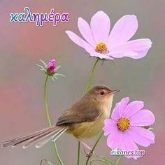 Good Morning Greetings, Good Morning Good Night, Good Morning Quotes, Beautiful Flower Drawings, Beautiful Flowers, Beautiful Pictures, Greek Language, Greek Quotes, Bird