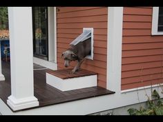 Cute Doggie Door For Big And Small Dogs Animal Haus