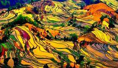 Guilin Rice Terraces, Longji, China
