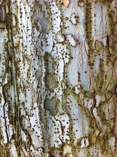 Tree bark // photo by Dana Rodriguez