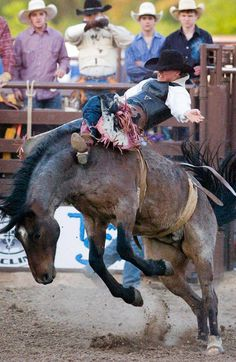 Rodeo Miami near Grand Lake is and annual event that is fun for the whole family! With kids activities and traditional rodeo events like bull and bronc riding, steer wrestling, calf roping and barrel racing its an event that everyone will love!