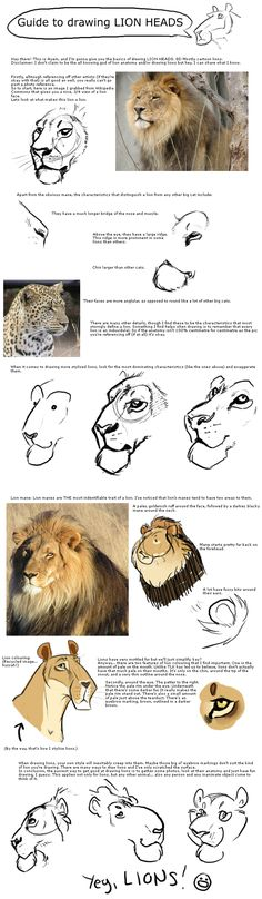 Drawing lion heads
