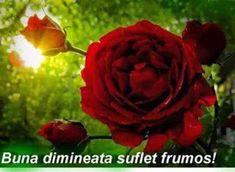 Pallet, Plants, Roses, Gift, Shed Base, Pink, Palette, Rose, Pallets