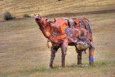 rusty cow