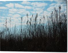 Mariia Kalinichenko Acrylic Print featuring the photograph Grass Against Blue Sky And Clouds by Mariia Kalinichenko #MariiaKalinichenkoFineArtPhotography #Clouds #Grass #FineArtPrint #FineArtPhotography
