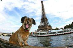 The Cute Adventures of Oscar the Globetrotting Dog - My Modern Metropolis