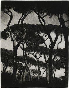 Lennart Olson, Pinjer Ostia, Photogravure, 1954, printed 1983