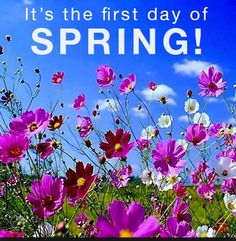 Happy First Day of Spring! #michellejonessingermd #indianapolis #indiana #carmel