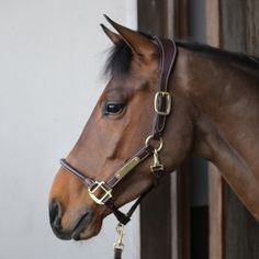 The Kentucky Anatomic Leather Headcollar is made from artificial leather that does not absorb water or dirt or change colour with use. Leather Halter, Horse Halters, Draft Horses, Equestrian Outfits, White Horses, Horse Care, Show Horses, Horseback Riding, Horse Riding