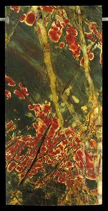 Cherry Creek Jasper - Flowering Shrub