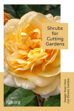 Design a cut flower garden with flowering shrubs that make fantastic flower arrangements. For roses from old-world heirloom roses to beautifully formed hybrid tea roses to grandiflora and floribunda roses, you'll find 300 species and tens of thousands of cultivars when searching for roses. So many choices! Landscaping Plants, Front Yard Landscaping, Floribunda Roses, Heirloom Roses, Cut Flower Garden, Hybrid Tea Roses, Flowering Shrubs, Cottage Gardens, Cut Flowers