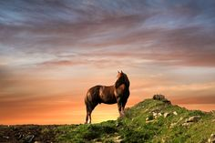 Standing Proud by Polly Hartney