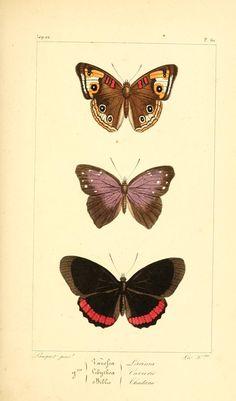 Agnus Day, Art Mignon, Image Nature, Photomontage, Cute Art, Ephemera, Moth, Insects, Photo Wall