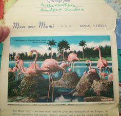 Vintage souvenir postcard Miami Florida