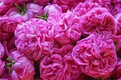 Συνταγή μαγιάτικο γλυκό τριαντάφυλλο. Ανεπανάληπτο φυσικό άρωμα τριαντάφυλλου και πρωτόγνωρη γεύση. Cabbage, Cooking Recipes, Vegetables, Rose, Flowers, Plants, Pink, Vegetable Recipes