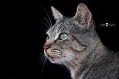 Lindo gatito – Tomás Sestayo