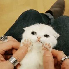 Beautiful Kittens, Cute Kittens, Animals Beautiful, Cats And Kittens, Kitty Cats, Cute Funny Animals, Cute Baby Animals, Animals And Pets, Animals Kissing