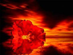 Animazione Fiore rosso in acqua sullo sfondo di riflessioni lontane temporali…