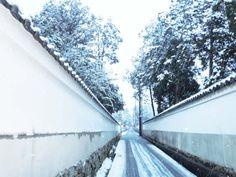 雪の奈良 きたまち界隈 なら散策日記【鹿と亀と猫と犬の日々】