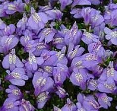 1000 images about asian garden ideas on pinterest for Low maintenance perennials for shade
