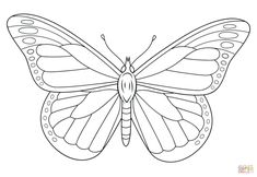 Monarch butterfly Coloring Page . Monarch butterfly Coloring Page . Monarch butterfly Sits On A Daisy Coloring Page Insect Coloring Pages, Shark Coloring Pages, Butterfly Coloring Page, Cute Coloring Pages, Flower Coloring Pages, Coloring Pages To Print, Free Printable Coloring Pages, Coloring Pages For Kids, Coloring Books
