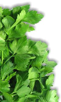 Parsley benefits