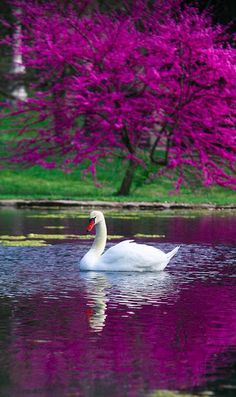 """** """"The Swan,"""" with Yo-Yo Ma. Exquisite Cello Piece. 
