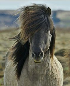 Beautiful wild pony:)
