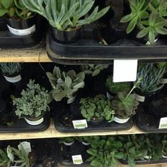 u know how plants need sunlight to live ya well i need constant reassurance You Are My Moon, Plants Are Friends, Plant Aesthetic, Cactus Y Suculentas, Echeveria, Botany, Shades Of Green, Mother Nature, House Plants