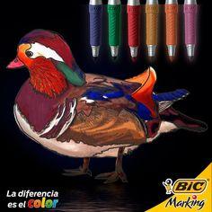 Con un colorido plumaje, el pato Mandarín se ha vuelto una de nuestras aves favoritas, ¿Cuál es la suya? #LaDiferenciaEsElColor