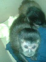 """""""O Grito do Bicho"""": Polícia encontra filhotes de macaco e de gavião de..."""