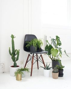 Via Immyandindi | Eames and Green