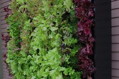 Do you need inspiration to make some DIY Ornamental Herb Garden in Your Home? Ornamental Herb Garden is a wonderful place to put all your wild garden plants, to plant plants and flowers with just a purpose in mind. Garden Boxes, Herb Garden, Vegetable Garden, Garden Plants, Indoor Plant Wall, Indoor Plants, Hampton Garden, Organic Horticulture, Garden Projects
