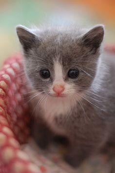 cute kitty is looking intently at something