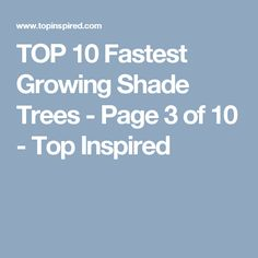 TOP 10 Fastest Growing Shade Trees - Page 3 of 10 - Top Inspired