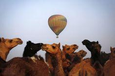 Pushkar Camel Fair ··· photo by TheAtlantic