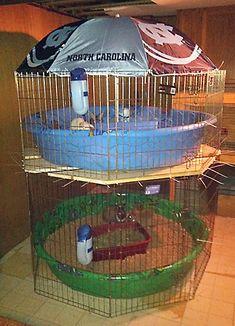 160 Rabbit Housing Indoor Ideas In 2021 Indoor Rabbit Rabbit Cages Bunny