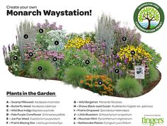 This garden offers a diversity of native plants that will create an explosion of life, color, and most importantly, BUTTERFLIES in your very own yard!