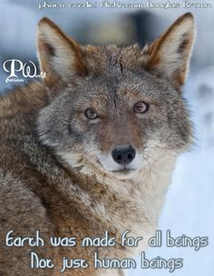 Earth was made for all beings.  Not just human beings. ~ photo credit:   #Coyote