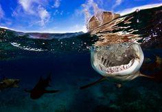 Scuba Diving Magazine's 2013 Underwater Photography Contest Finalists | Scuba Diving