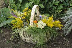 Fresh herbs harvested from herb garden...