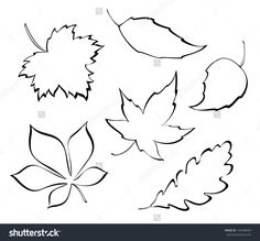 Vector Falling Leaves - Stylized Design Elements - 142498045 : Shutterstock