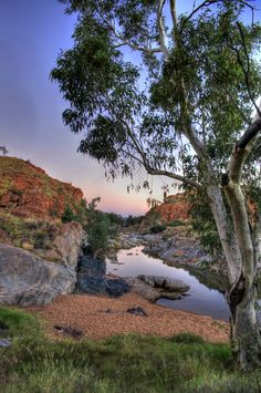 Billabong north of Alice Springs, Australia