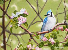 Canadian Wildlife Artist featuring original works of art and prints Original Artwork, Original Paintings, Canadian Wildlife, Wildlife Art, Art For Sale, Jay, Apple, Bird, The Originals